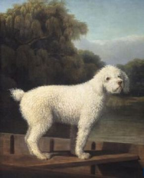 An 18th Century poodle by Stubbs.
